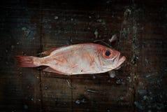 在一个板条的鲜鱼内圆角在海市场上 免版税库存照片