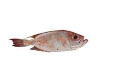 在一个板条的鲜鱼内圆角在海市场上 免版税库存图片