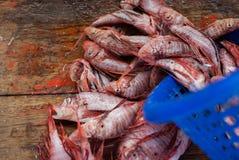 在一个板条的鲜鱼在海市场上 免版税图库摄影