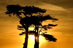 在一个柏树丛的日落在圣克鲁斯 免版税库存照片