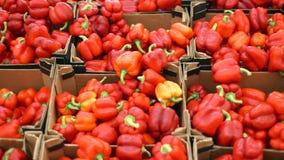 在一个柜台的红色甜椒在超级市场 在堆的很大数量的红辣椒 影视素材