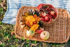在一个柳条盘子的水多的苹果,围拢由下落的秋叶 与干燥说谎的美好的分支  免版税库存图片