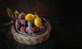 在一个柳条筐的成熟和水多的黄色和蓝色李子在一个土气样式 愉快的感恩 复制空间 免版税库存照片