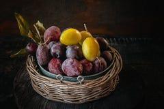 在一个柳条筐的成熟和水多的黄色和蓝色李子在一个土气样式 愉快的感恩 图库摄影
