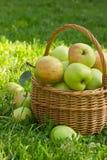 在一个柳条筐的有机绿色苹果在绿草,垂直的图象 库存照片
