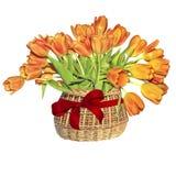 在一个柳条筐的橙色郁金香花束与红色丝带弓 图库摄影