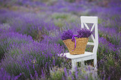 在一个柳条筐的淡紫色淡紫色花 库存照片