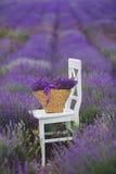 在一个柳条筐的淡紫色淡紫色花 免版税库存图片