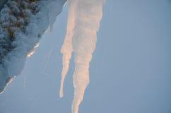 在一个树干的冰柱在冬天 免版税库存照片