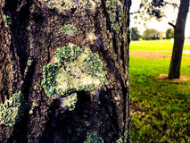 在一个树干的地衣在公园 免版税库存图片