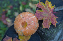 在一个树桩的一点南瓜在叶子 免版税库存图片