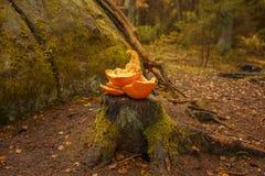 在一个树桩的被击碎的南瓜在森林里 免版税库存照片