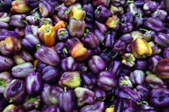 在一个桶的紫色甜椒在水果市场上 免版税图库摄影