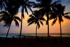 在一个棕榈线的海滩的日落在加纳 图库摄影