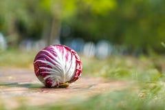 在一个棕色木背景特写镜头的紫罗兰色圆白菜 免版税库存图片