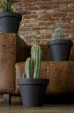 在一个棕色沙发前的仙人掌植物 库存图片