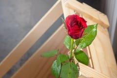 在一个棕色箱子的一朵红色玫瑰 库存照片