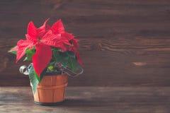 在一个棕色葡萄酒罐的一品红在木背景 免版税图库摄影