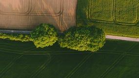 在一个棕色黄色领域和一个绿色领域之间的两棵大绿色树 库存照片