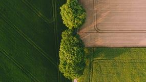在一个棕色黄色领域和一个绿色领域之间的两棵大绿色树 免版税库存照片
