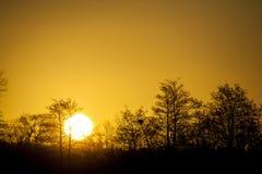 在一个森林上的丹麦日落有清楚的黄色天空的 库存照片