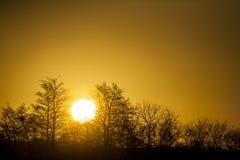在一个森林上的丹麦日落有清楚的黄色天空的 库存图片