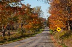 在一个森林中间的被铺的路在秋天 免版税库存图片