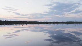 在一个森林湖的岸的分开的干燥树在晚上末期 股票录像
