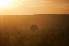 在一个森林的夏天日落在越南 免版税库存图片