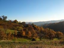 在一个森林的平底锅在罗马尼亚 库存图片