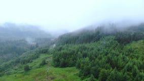 在一个森林的飞行薄雾的在苏格兰高地 影视素材