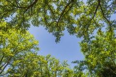 在一个森林里面的草丛风景亚平宁山脉山的 库存照片