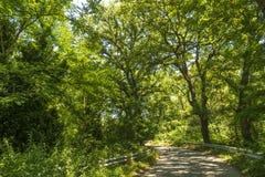 在一个森林里面的草丛风景亚平宁山脉山的 免版税库存照片