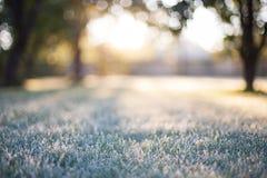 在一个模糊的bokeh日出背景的结霜的草 库存图片