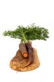 在一个橄榄色的委员会的两棵黑红萝卜 库存照片