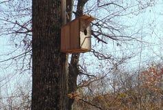 在一个橡树的树干的小木鸟舍在森林里 免版税库存照片