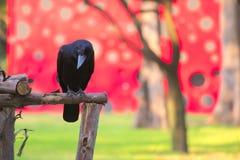 在一个欢乐地被绘的大厦前面被栖息的一只黑乌鸦的一个显著地美好的场面,奇怪地弄脏由bokeh透镜e 库存图片