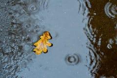 在一个水坑的一片橡木叶子在沥青 秋天,雨 在视图之上 库存照片