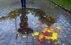在一个水坑的下落的叶子与一个人和umbr的反射 免版税库存图片