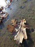 在一个水坑的叶子在水 库存照片