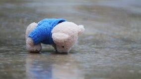 在一个水坑的被放弃的玩具熊在雨中 股票录像