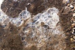 在一个水池的冰在自然 免版税图库摄影