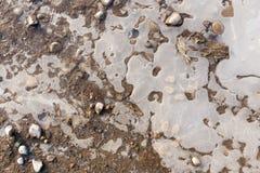 在一个水池的冰在自然 图库摄影