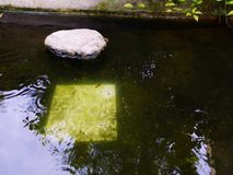 在一个水池的水在我的家 库存图片