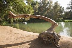 在一个池塘旁边的树干在农村公园 图库摄影