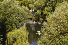 在一个池塘的天鹅在一个公园在莫斯科 免版税库存照片