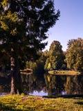 在一个池塘的岸的秋天树在晴朗的清楚的wea的一个公园 库存照片