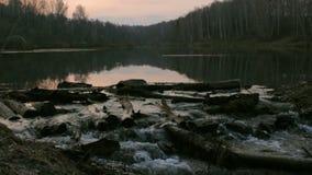 在一个池塘的自然海狸` s水坝在森林,动物游泳 早期的春天晚上 股票视频