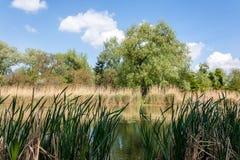 在一个池塘的银行在维也纳多瑙河公园  库存照片