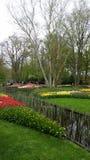 在一个池塘附近的不同的花在Keukenhof荷兰 免版税库存图片